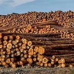 Log Yard, Port Angeles, Washington