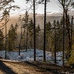 Managed Timberlands near Joyce, WA